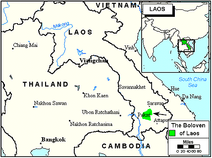 Laven in Laos